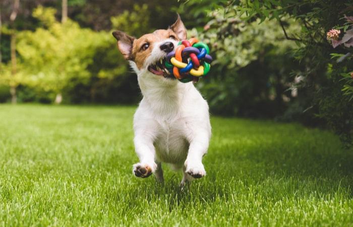 Cuánto cuesta mantener a un perro - juguetes