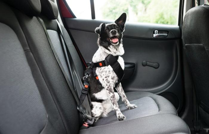 Arnés perro para coche