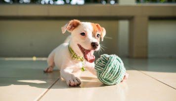 Juguetes baratos para perros