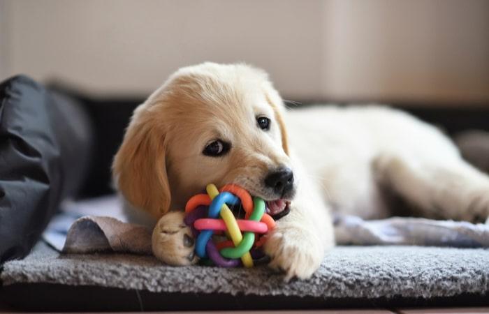 Jugar con un cachorro