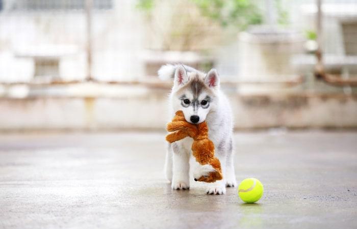 cómo jugar con un cachorro