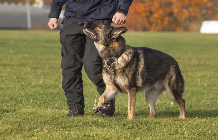 Perros de trabajo policia