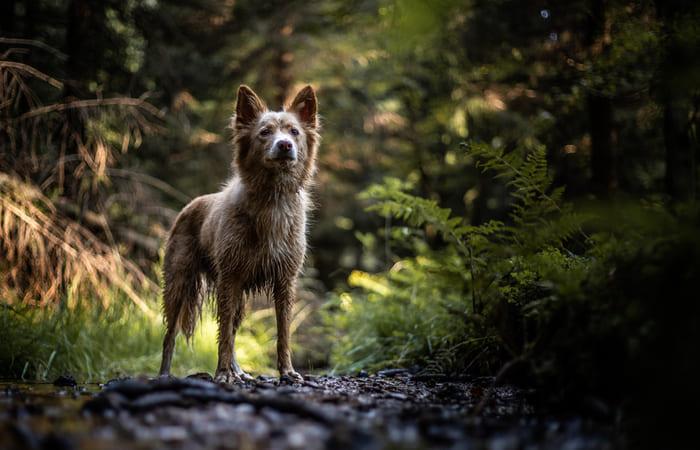 que significa soñar con perros salvajes