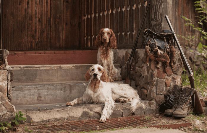 tipos perros caza